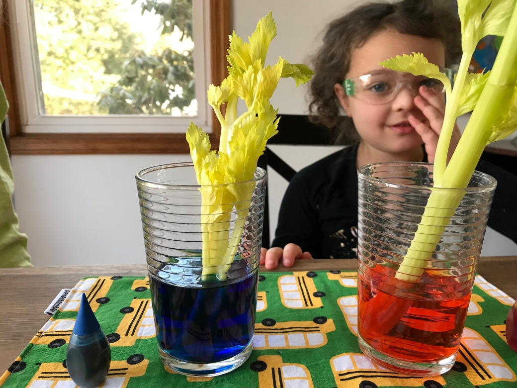 Kids Science Goggles are great for parties